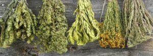 Μάθε τις ασθένειες που θεραπεύει κάθε βότανο – Πλήρης κατάλογος