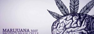 Η Μαριχουάνα μπορεί να προστατέψει τα εγκεφαλικά κύτταρα από το Αλτσχάιμερ