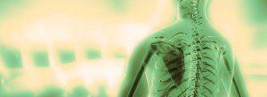 Σπονδυλική στήλη | Το μήνυμα του κάθε σπονδύλου για τη ζωή μας