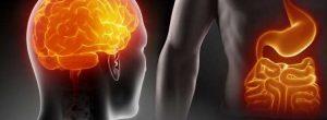 Η βιολογία της ψυχικής ισορροπίας: Εγκέφαλος, έντερο, και άγχος