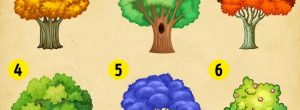 Διαλέξτε ένα δέντρο και ανακαλύψτε τι σας περιμένει το 2018