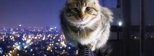 Ο συμβολισμός της γάτας: τι αντιπροσωπεύουν οι γάτες στον πνευματικό κόσμο
