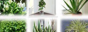 Αυτά τα φυτά είναι θησαυροί οξυγόνου – Πάρτε τουλάχιστον ένα στο σπίτι σας!