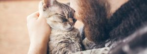Οι θεραπευτικές ιδιότητες του γουργουρίσματος της γάτας [video]