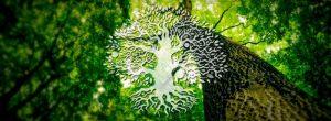 Μάθε τι δέντρο – προσωπικότητα είσαι σύμφωνα με την Κέλτικη αστρολογία